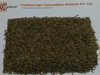 Superb Quality Cumin Seeds