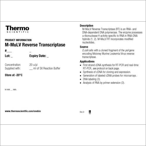 M-MulV Reverse Transcriptase
