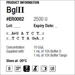 Bgl II enzyme