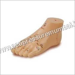 Foot Acupuncture Model