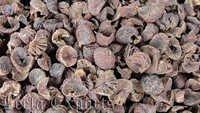 Betel Nut (Indian Origin)