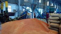 Chilli Powder Plant