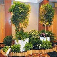 Plant Rental Services