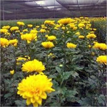 Flower Plantation Services