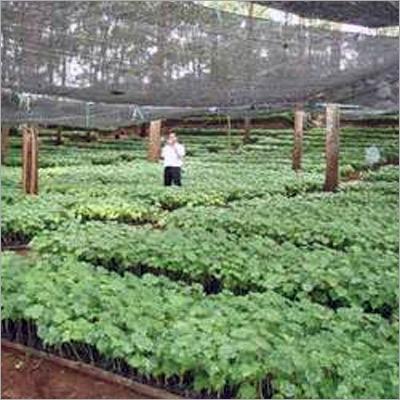 Nursery Plantation Services