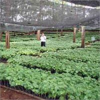 Nursery Plantation Services