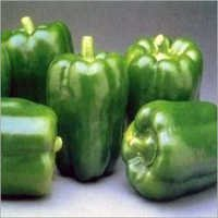 Capsicum Plants Services