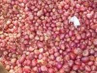 Krishnapuram Onion
