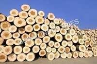 Wood Round Logs
