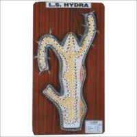 MODEL OF HYDRA