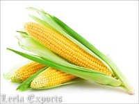 corn puff