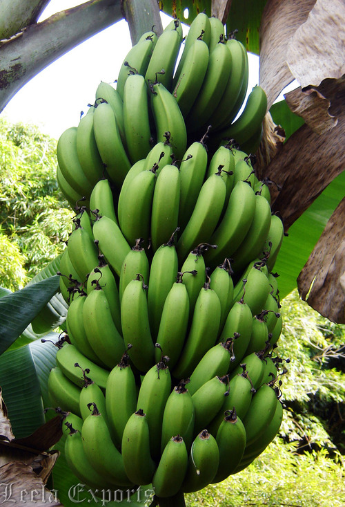 FRUITS : BANANA