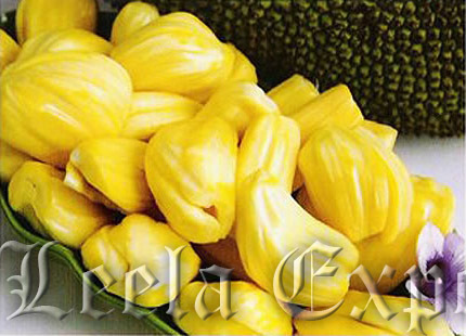 manufactures of jackfruit products