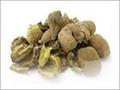 Hirda Seeds