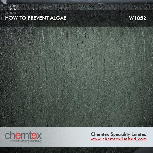 How to Prevent Algae
