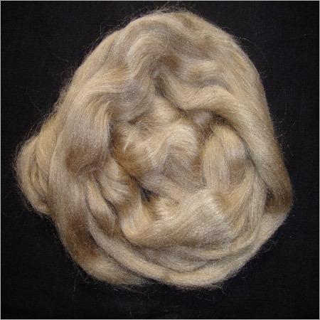 Tasar Silk Cocoons