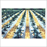 Crop Protection Non Woven Covers