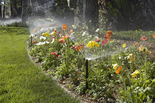 Foggers And Micro Sprinkler System