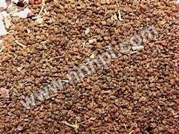 Priyangu Seeds