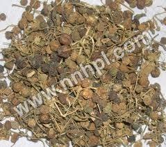 Pitpapra Extract