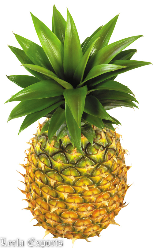 FRUITS : PINEAPPLE