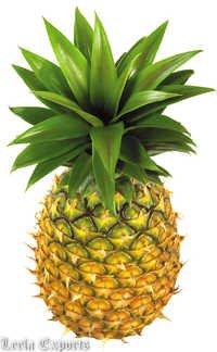 pineapple titbit