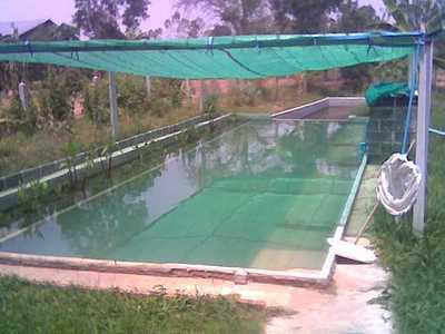 Swimming Pool Shade Nets