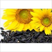 Sunflower Seeds Meal