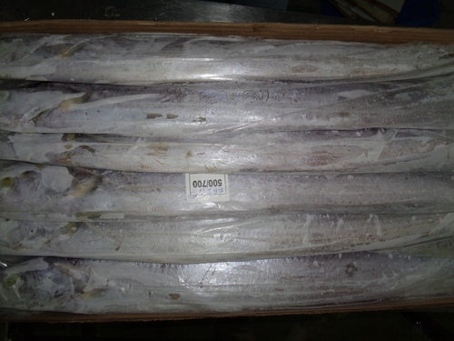 Frozen Ribbon Fish IWP