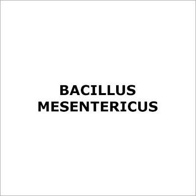 Bacillus Mesentericus
