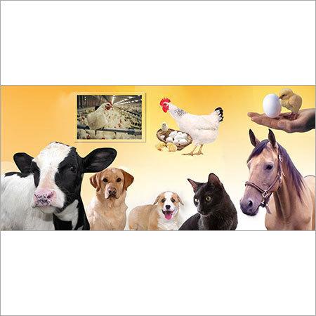 Customised Blends for Cattle