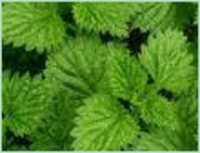 MENTHA ARVENSIS 50% DEMENTHOLISED OIL