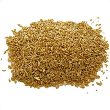 Healty Wheat