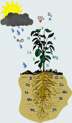 Plant Growth Regulator