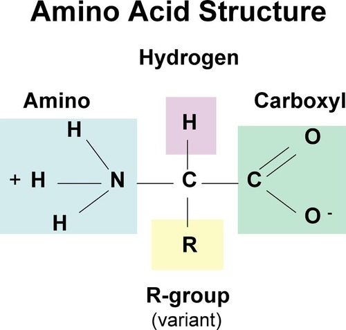 Amino acid formulation