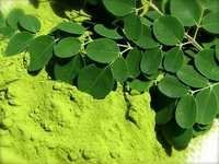 Moringa Leaves & Powder