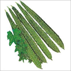 Ridgegourd Seeds