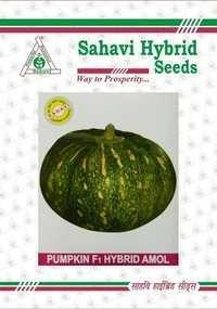 Pumpkin F1 Hybrid Amol