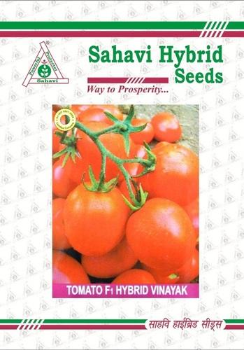 Tomato F1 Hybrid Vinayak