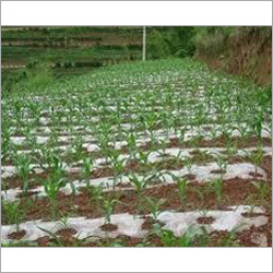 Mulch Film for Crop Production
