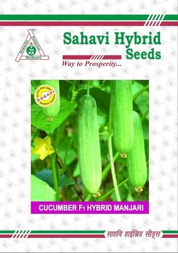 Cucumber F1 Hybrid Manjari