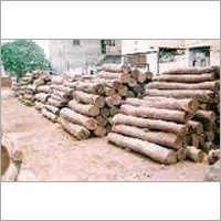 Indian Sal Wood Timber