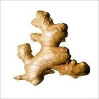 DRY GINGER ROOT POWDER EXTRACT