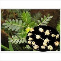 TRIBULUS TERRESTRIS POWDER EXTRACT