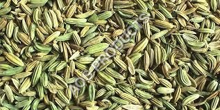 Fennel oil
