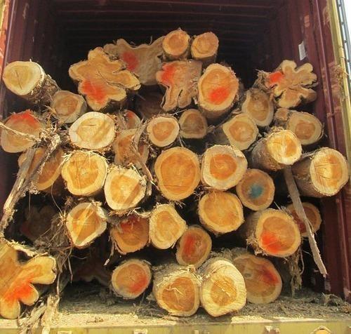 Panama Teak Wood Logs