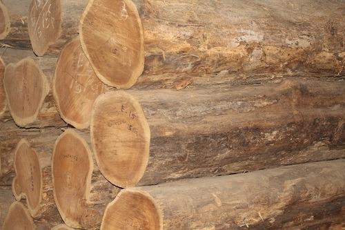 Ivory Coast Teak Logs