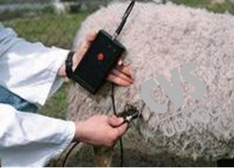 CVS 295 Pregnancy Detector For Sheep