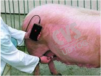 CVS 296 Pregnancy Detector For Pig