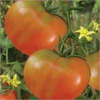 Tomato (Anmol) Seeds